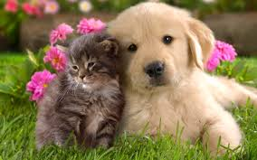 $3,120 PET SUPPLIES – Monthly